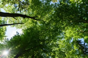 Leaf forest crown background